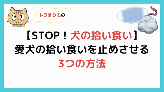 【STOP!犬の拾い食い】3つの方法で絶対拾い食いを止めさせる!