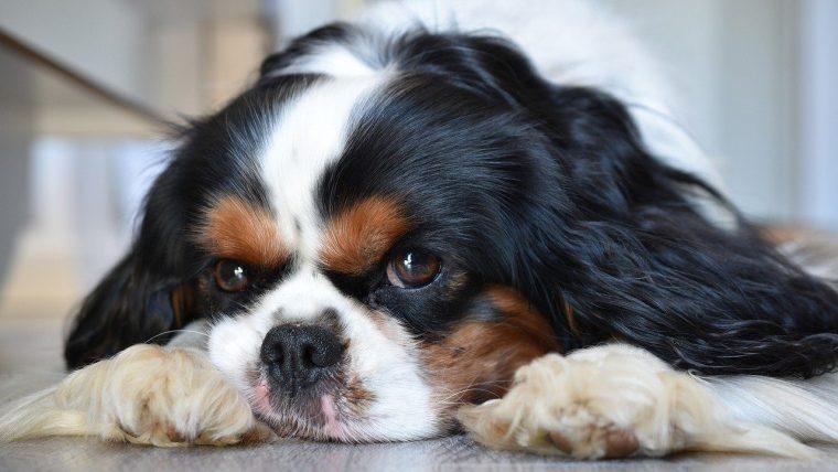 犬の外耳炎の5つの原因