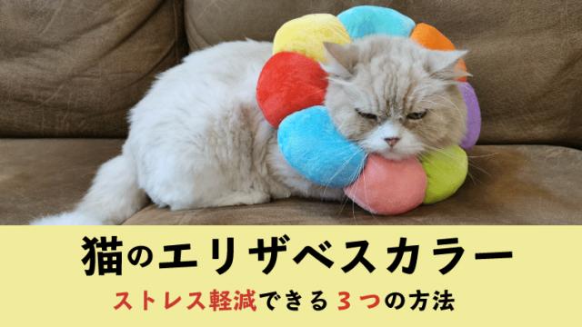 【猫のエリザベスカラー】ストレス軽減できる3つの方法【嫌がる愛猫のために】
