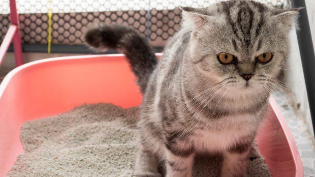 猫の粘液(粘膜)便