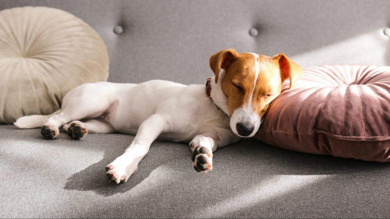 犬の血便の原因はたくさん!ストレスもありうる