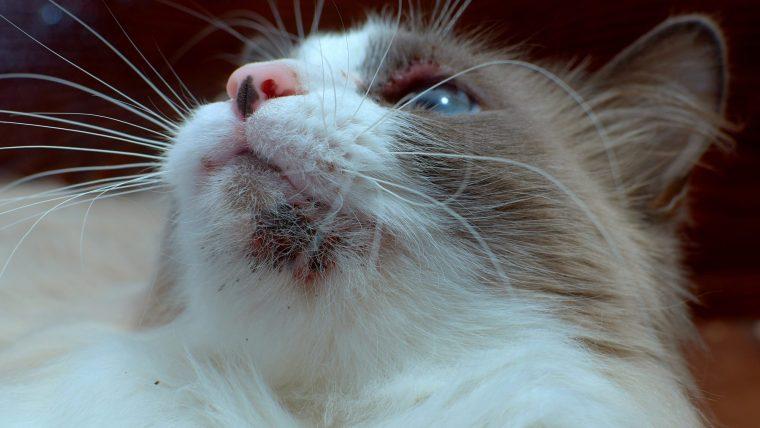 猫の顎ニキビの原因とは?