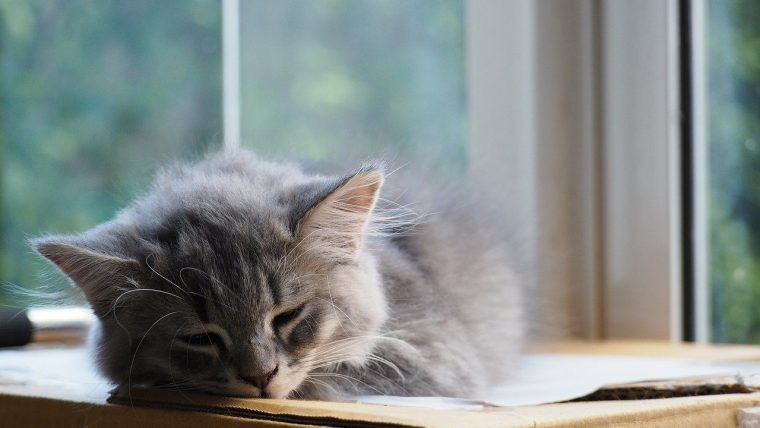 猫の日光浴はガラス越しでOK