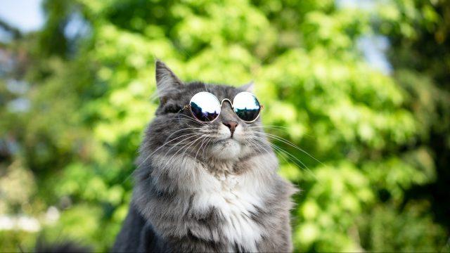 【猫の熱中症】原因や症状、夏場の快適な室温を獣医師が解説!