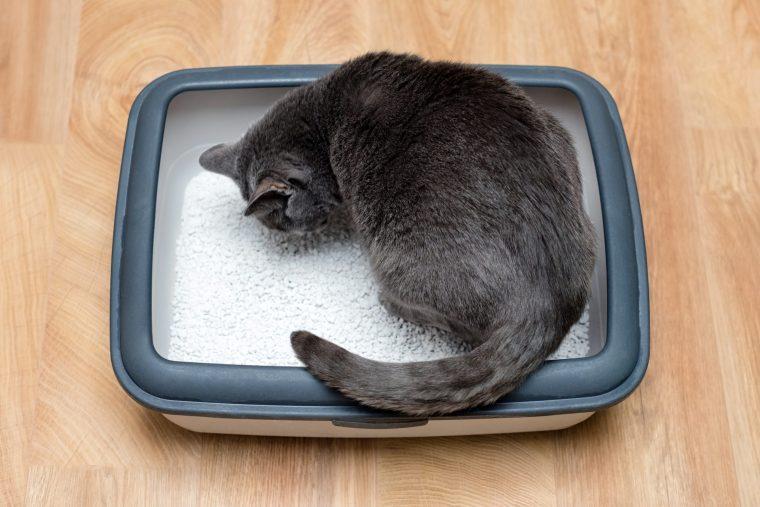 猫が猫砂を食べる3つの理由【異嗜とは?】