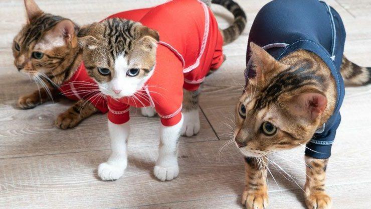猫の皮膚保護服「エリザベスウエア」がおすすめな5つの理由