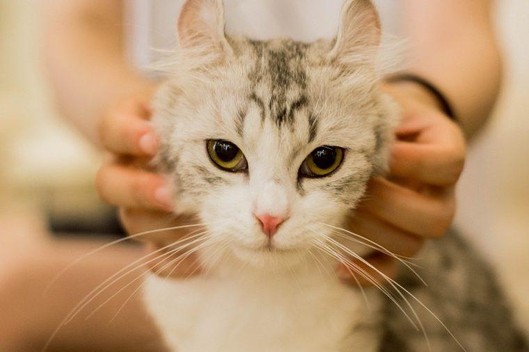 猫の体温(平熱)はおよそ38.0~39.0℃