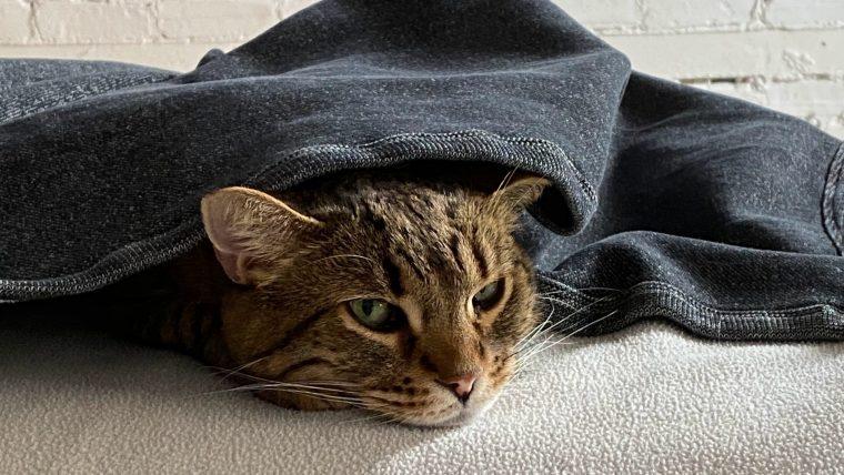 ペットの低体温症~温め方
