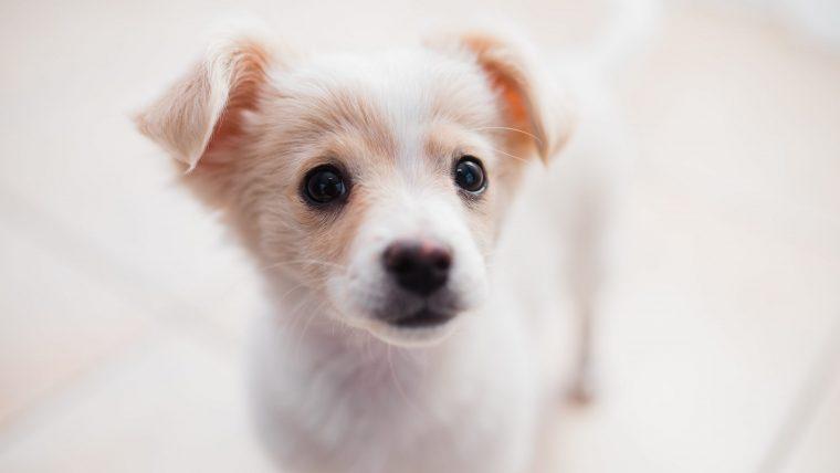 犬や猫が低体温症になる原因は?