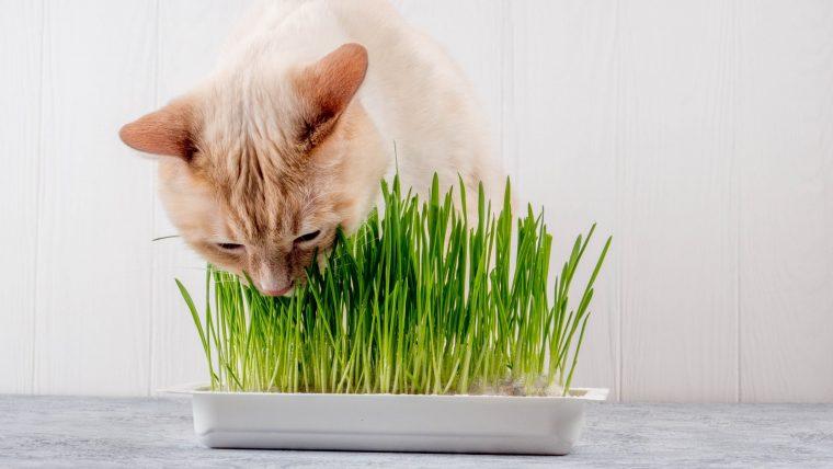 犬も猫も草を食べるのは正常!ただし食べすぎは注意!