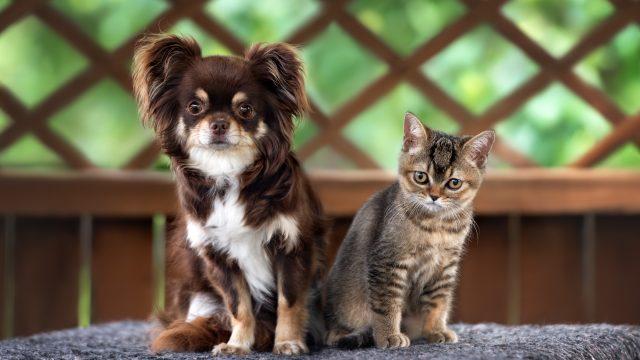 【犬猫のノミダニ予防】市販でOK?室内飼いもする?などペットのノミダニ予防のよくある疑問を解決!