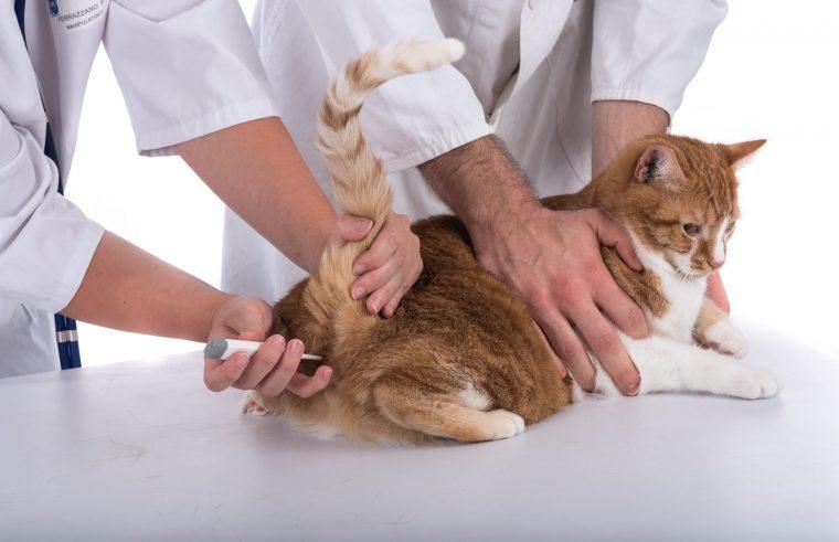 猫の体温計は「緊急時なら」人間用でOK!だけどあまりすすめません