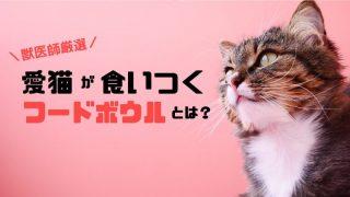 【獣医師おすすめの猫の食器】フードボウルが合わないときのしぐさとは?