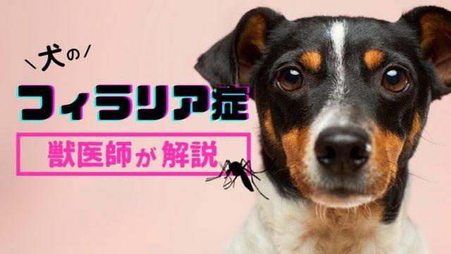 【犬のフィラリア症】予防薬はいつから?人間や猫にもうつる?などフィラリアを徹底解説!