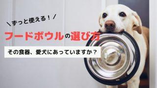 【獣医師おすすめの犬の食器】フードボウルが合わないかも?器から出して食べる理由とは