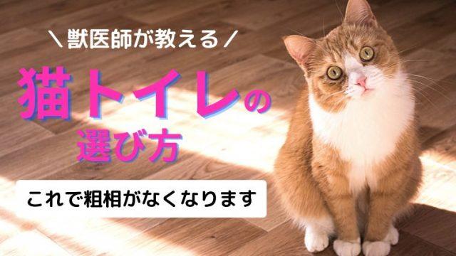 【獣医師が教える!】おすすめの猫トイレは「大きく、砂状、アクセスよし!」