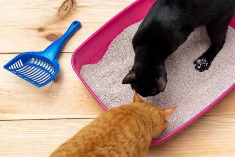 獣医師おすすめ!猫のトイレ3選~快適で病気の予防!