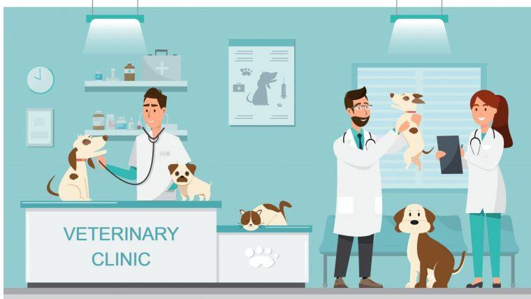 療法食は動物病院で購入しよう!