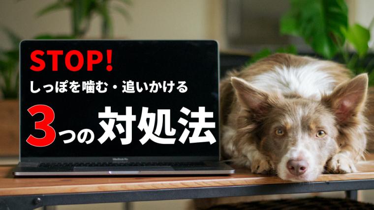 【注意】犬がしっぽを噛む原因とやめさせる方法【しっぽを追いかけるのには理由がある】