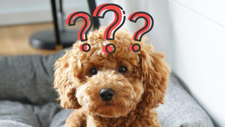 犬の卵巣遺残症候群とは?