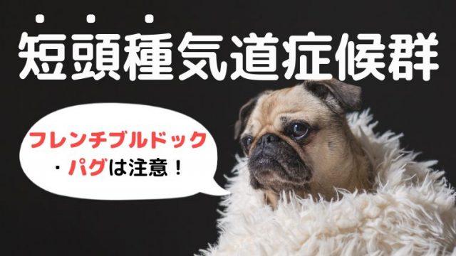 【犬の短頭種気道症候群】症状や5つの対策を解説!【手術写真あり】