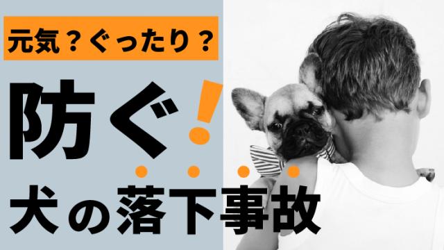 【犬の落下事故】犬を落としてしまったときの対処法【元気?ぐったり?】