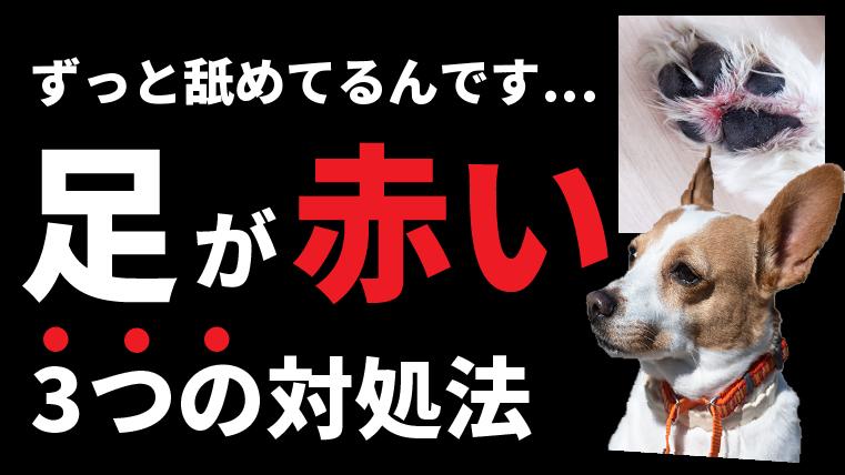 犬の足が赤い!し間炎について対処法を解説【なぜ足を舐めるのか?】