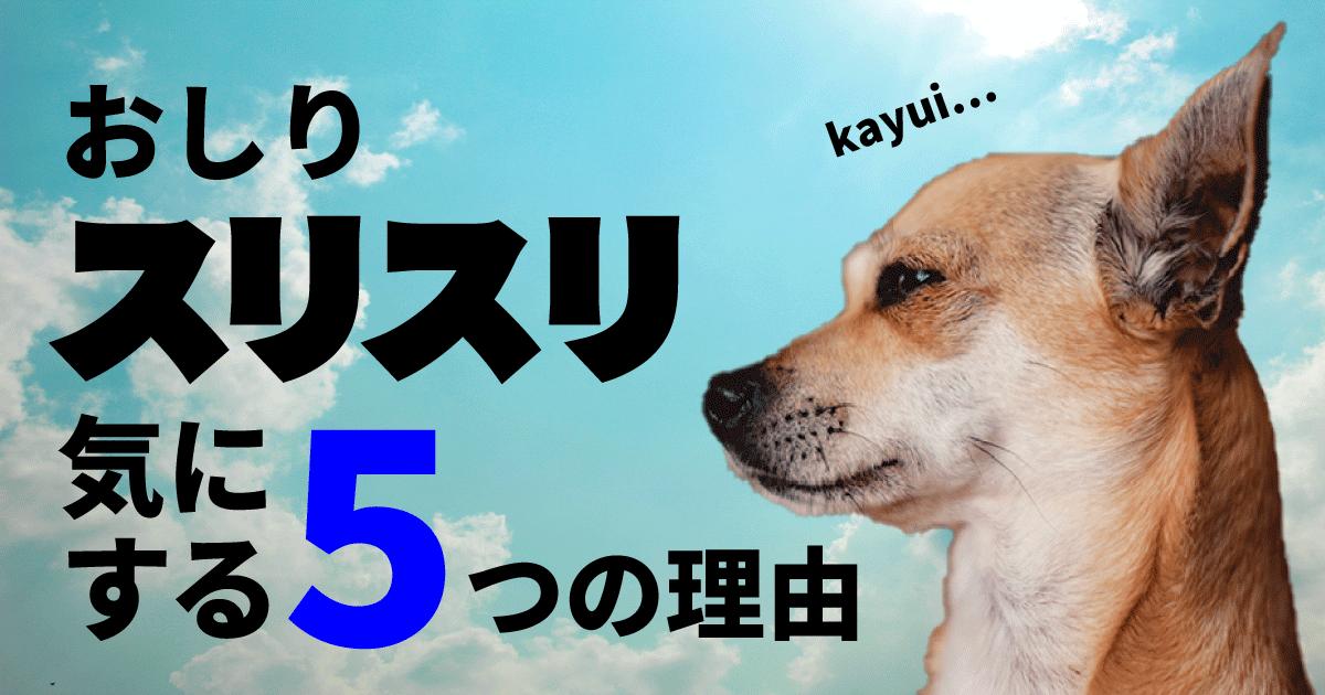 犬がおしり歩きをする【犬がおしりを気にする理由とは?】