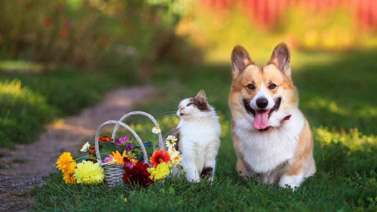 愛犬・愛猫と夏を快適に過ごすための5つの対策