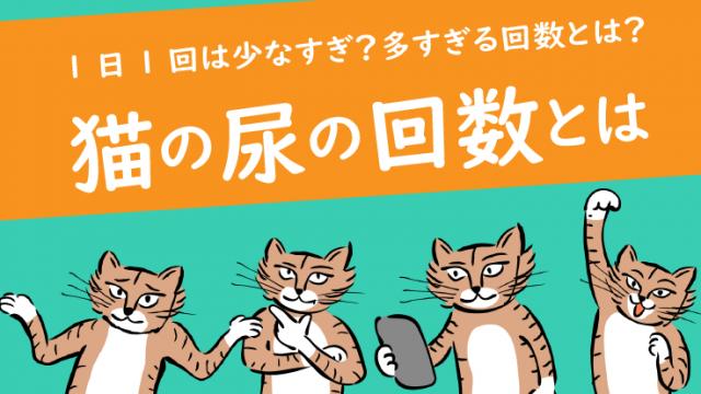 猫の尿の回数とは?1日1回は少なすぎ?多すぎの指標を獣医師が解説!