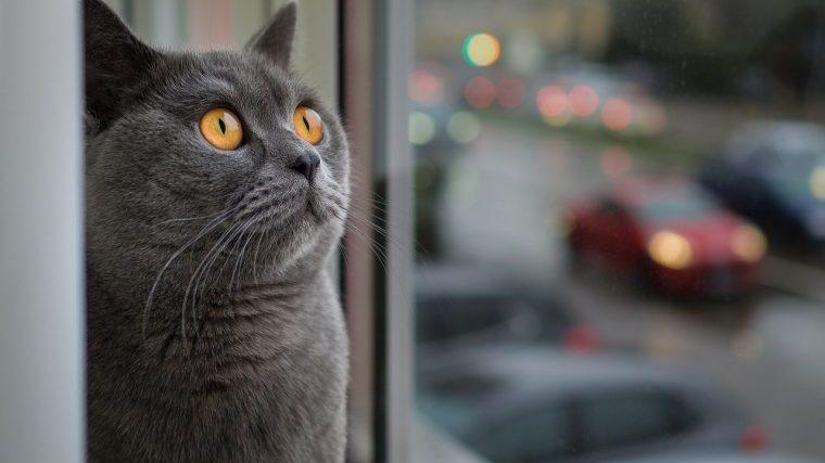 猫の皮下補液についてよくある質問まとめ