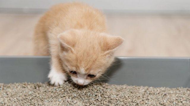 猫の食糞はあまりない【異嗜(いし)という病気の可能性あり】
