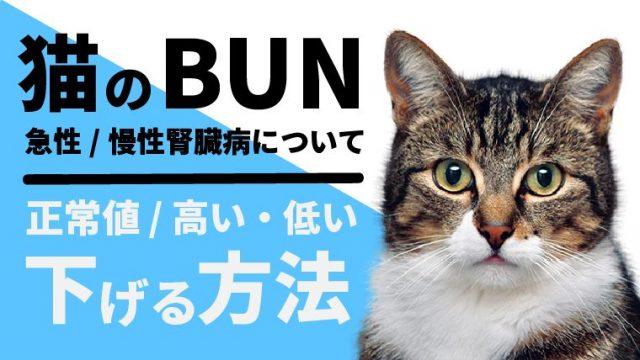 猫のBUNの正常値や高い/低い場合の対処法