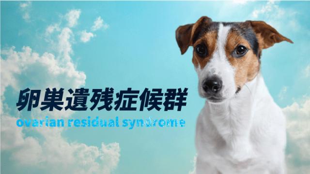 【犬の卵巣遺残症候群】避妊手術後の発情!?出血、膿、粗相などは可能性あり