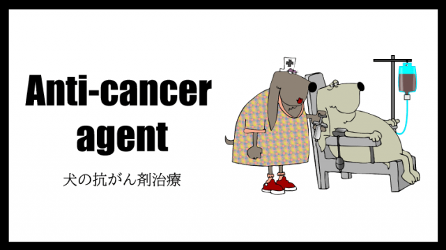 【犬の抗がん剤治療(化学療法)】副作用や効果・回数などを獣医師が解説!