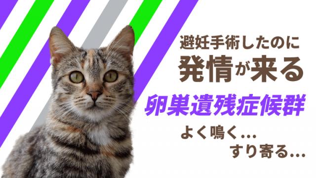 【猫の卵巣遺残症候群】避妊手術後の発情!?よく鳴く、すり寄るは可能性あり