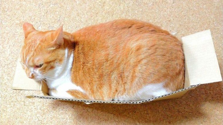 猫が肥満にならないようにすることが重要