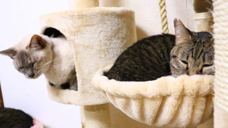 猫の肥満の5つの対策