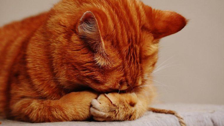 猫の睡眠時のよくあるお悩み