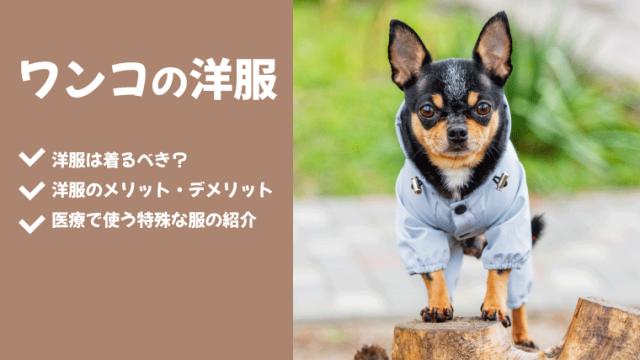 【犬が洋服を着る3つのメリット】デメリットや嫌がるときの対処法も解説!