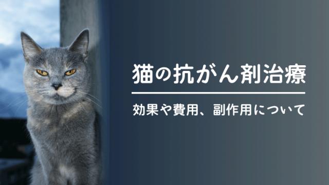 【猫の抗がん剤治療(化学療法)】副作用や効果、費用などを獣医師が解説!