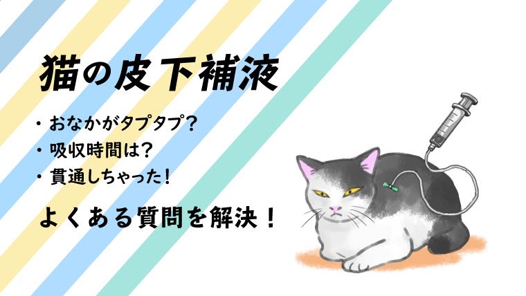 【猫の点滴・皮下補液 】効果や自宅での方法、吸収時間を解説!【おなかが腫れる?】