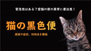 【猫の黒い便(メレナ)】黒い便をする原因や症状、対処法を獣医師が解説!