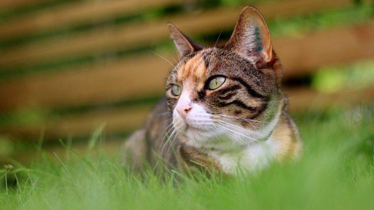 猫草は猫にあげるべき?