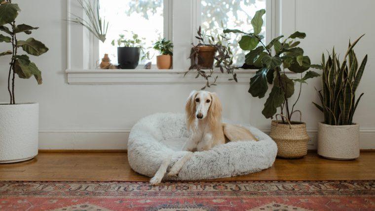 犬にとって安全な観葉植物