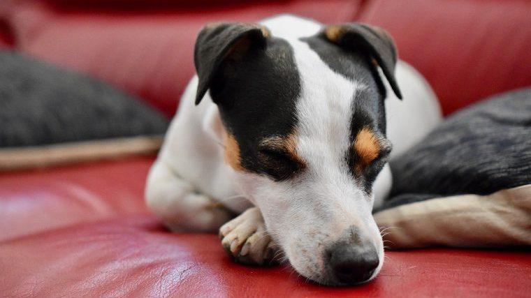 犬が観葉植物を食べたらどんな中毒症状がでるの?