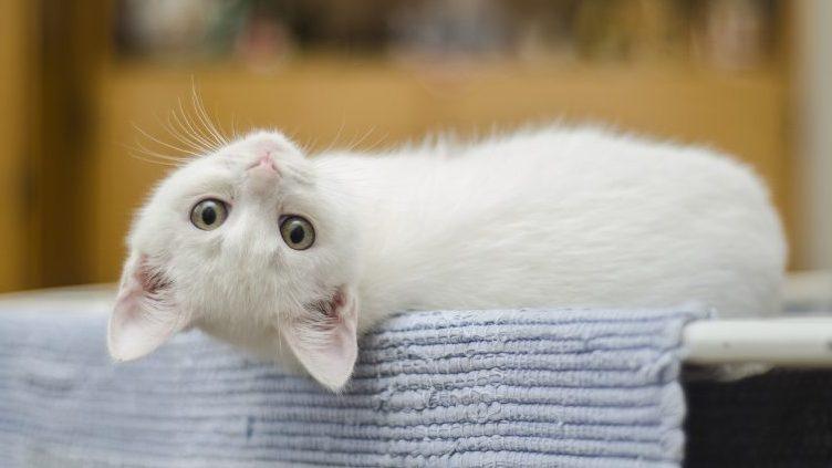 猫の点滴・皮下補液とは?