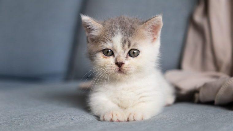 猫の便に白い虫がいたら、急いで動物病院に行くべき?