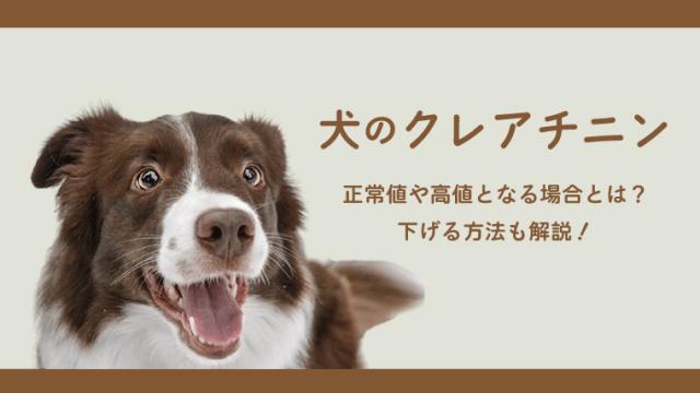 【犬のCre(クレアチニン)】正常値や高値となるとき、下げる方法を獣医師が解説!
